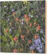 Alpine Wildflowers Hurricane Ridge 4031 Wood Print