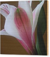 Alstroemeria - Alone Wood Print