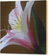 Alstroemeria - Responding Wood Print