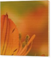 Alstroemeria I Wood Print