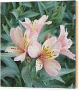 Astroemeria  Wood Print