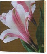 Alstroemerias - Together Wood Print