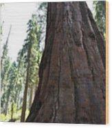 Alta Vista Giant Sequoia Wood Print