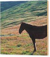 Altay Wood Print