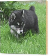 Alusky Puppy Dog Spotting A Toy To Play With Wood Print