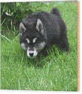 Alusky Puppy Stalking Through Tall Green Grass Wood Print
