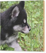 Alusky Puppy Tip Toeing Through Green Foliage Wood Print