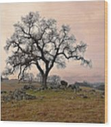 Amador Oak Wood Print