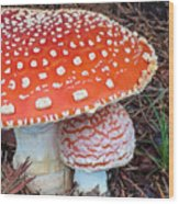 Amanita Muscaria - Red Mushroom Wood Print