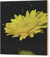 Amarillo 001 Wood Print