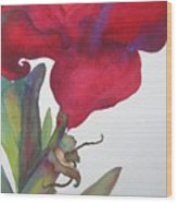 Amaryllis 2 Wood Print