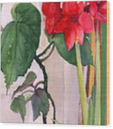 Amaryllis And Begonia Wood Print