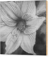 Amaryllis And Tree Frog Painted Bw Wood Print