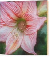 Amaryllis And Tree Frog Painted  Wood Print