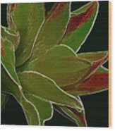 Amaryllis Art Wood Print
