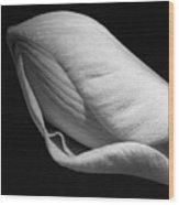 Amaryllis Bw Wood Print