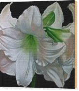 Amaryllis Wood Print by Doug Strickland