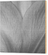 Amaryllis Flower Petals In Black And White Wood Print