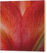 Amaryllis Flower Petals Wood Print