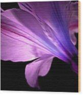 Amaryllis Glow Wood Print