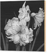 Amaryllis In Black And White Wood Print