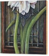 Amaryllis In The Window Wood Print