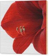 Amaryllis On White 3 Wood Print