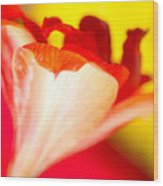 Amaryllis Shadow Abstract Flower With Shadow On Red And Yellow Wood Print