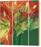 Amaryllis Triptych Wood Print