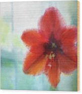 Amaryllis Window Wood Print