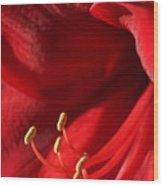 Amaryllis6709 Wood Print