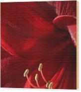 Amaryllis6790 Wood Print