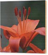 Amazing Blooming Orange Lilies Flowering In A Garden  Wood Print