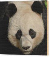 Amazing Face Of A Beautiful Giant Panda Bear Wood Print