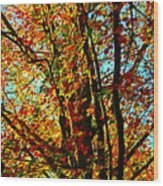 Amazing Fall Foliage Wood Print