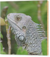 Amazing Gray Iguana Sitting In The Top Of A Bush Wood Print