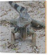 Amazing Iguana With A Striped Tail On A Beach Wood Print