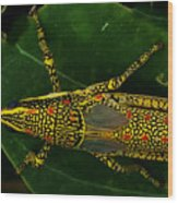 Amazing Insect Wood Print