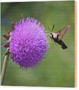 Amazing Insects - Hummingbird Moth Wood Print