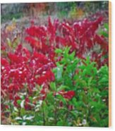Amazing Nature Blessings Magic Colors Cherry Red Green Shrubs Plants Save  The Environment Wood Print