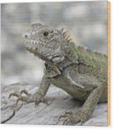 Amazing Posing Gray Iguana Perched On A Log Wood Print