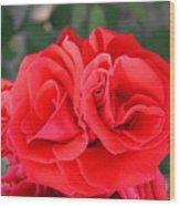 Amazing Rose Wood Print