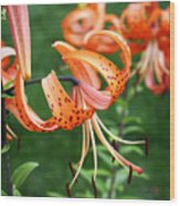 Amazing Tiger Lily Wood Print