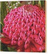 Amazing Waratah Flower Wood Print