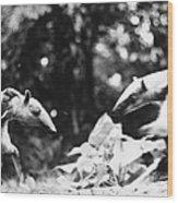 Amazon: Anteater Wood Print