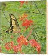 Amazonia Butterfly Wood Print
