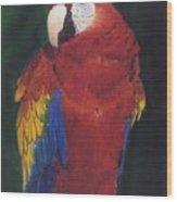 Amazonian Rainbow Wood Print