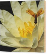 Amber Dragonfly Dancer Too Wood Print