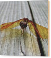 Amber Dragonfly Wood Print