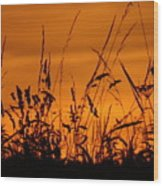 Amber Sundown Meadow Grass Silhouette  Wood Print